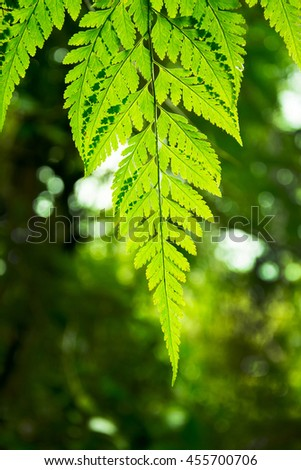 Beautyful ferns leaves green foliage natural floral