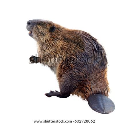 Adult dating in beaver creek montana in Perth