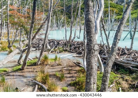 Beaver dam and lake in Tierra del Fuego, Argentina