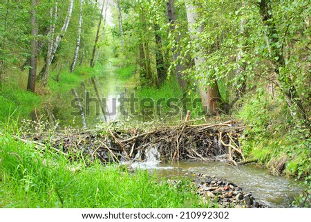 Beaver dam on The Lucni potok (Meadow creek) nearby Pilsen city. Czech Republic, Europe. - stock photo