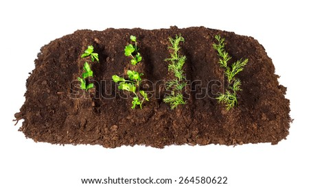Bed dill parsley closeup isolated white background top view - stock photo