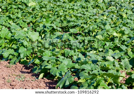 Bed in the garden with vegetables - stock photo