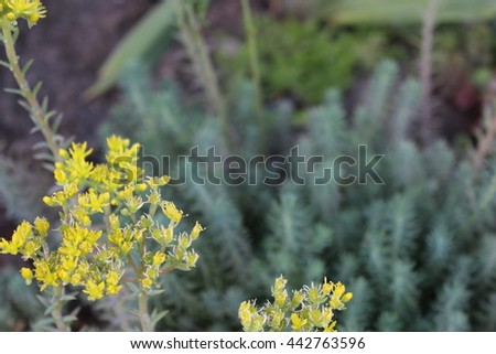 Bed of succulents with selective focus - stock photo