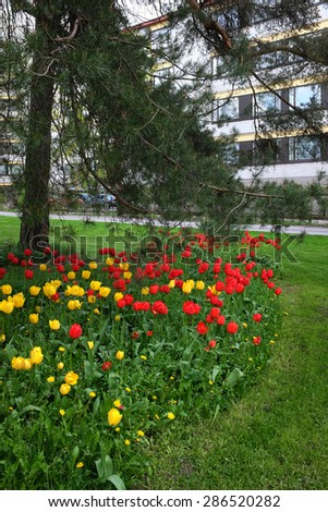 bed of tulips, lawn and pine trees in a residential area, Jarvenpaa, Finland - stock photo