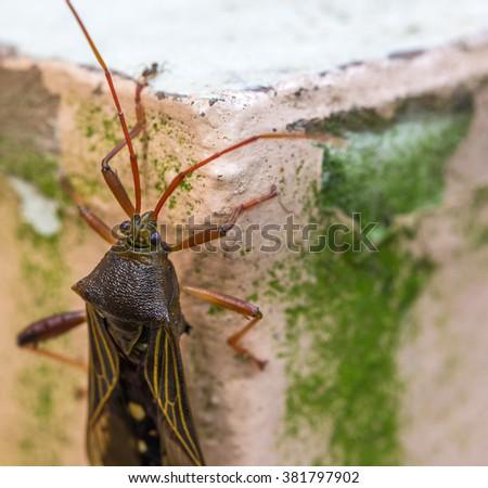 Bedbug. - stock photo
