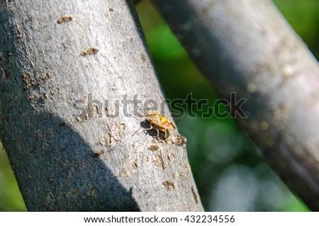 Bedbug Stinky - stock photo
