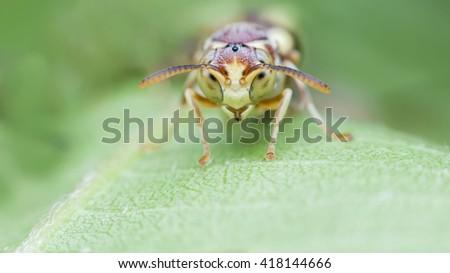 bee - stock photo