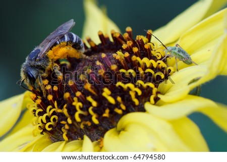 Bee and Bug Sharing a Flower