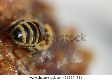 Bee and honey - stock photo