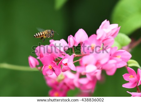 Bee and Mexican creeper flower / Blur and Sele ct focus