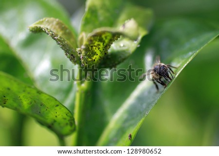 Bee and Mites - stock photo