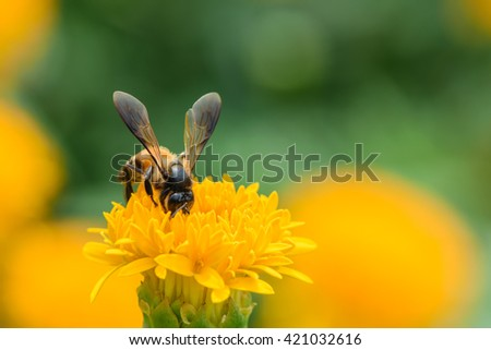 Bee and yellow flowers, work for honey, work hard, soft focus