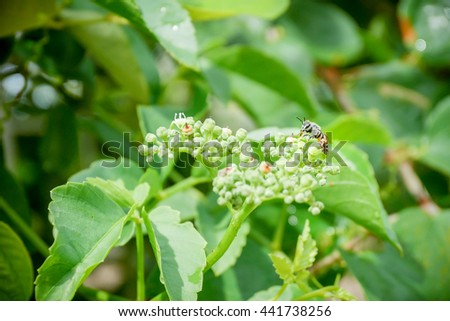 Bee at work on green leaves - stock photo