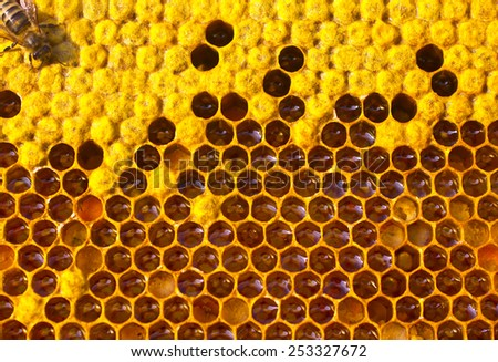 Bee caring for larvae.  - stock photo