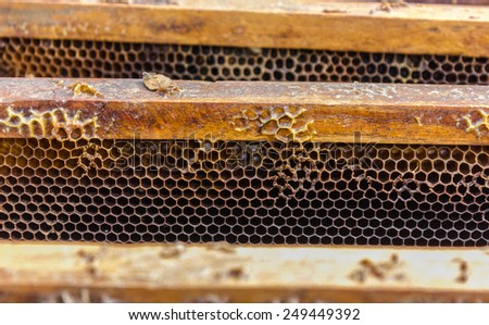 bee comb form box wood - stock photo