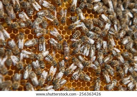 Bee family - stock photo