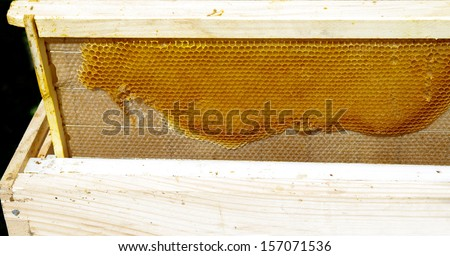 bee farming  closeup of honeycomb board pulled from the hives