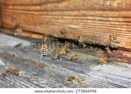 Bee flying in front of a beehive - stock photo