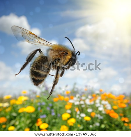 Bee flying over colorful flower field at summer day - stock photo