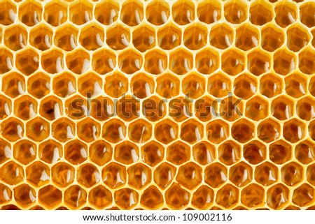 bee honey in honeycomb closeup - stock photo