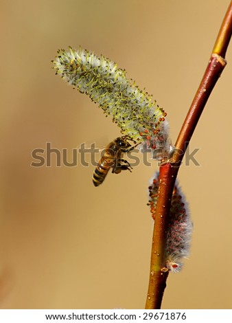 Bee in flight close up - stock photo
