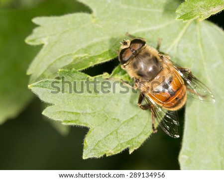 Bee in nature. close - stock photo