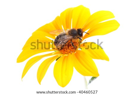 bee in the flower - stock photo