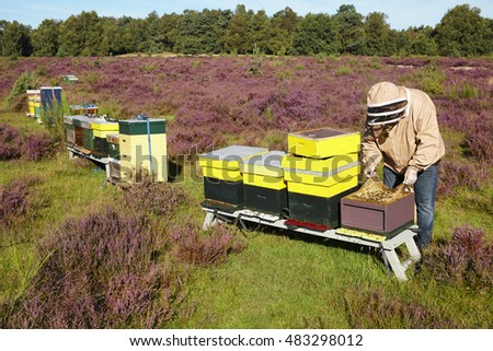 Bee keeper at National park 'De Veluwe', section 'Posbank', near the city of 'Arnhem', province of 'Gelderland', the Netherlands