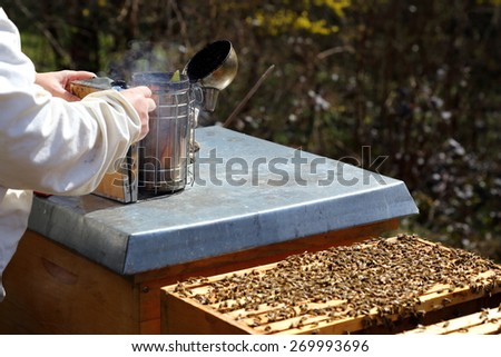 bee keeper is preparing a smoker near bee hive - stock photo