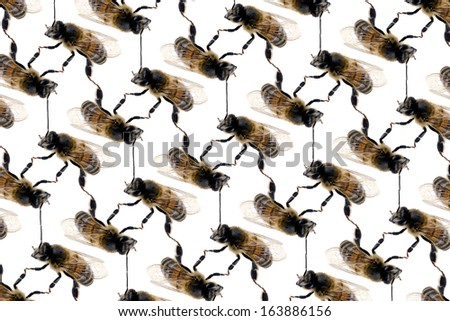 Bee line wallpaper pattern on white background - stock photo