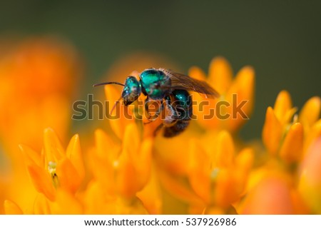 Bee on a flower bud