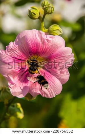 Bee on a flower garden summer day - stock photo