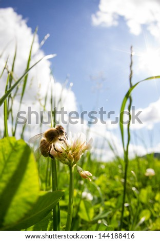 bee on clover in sky   - stock photo