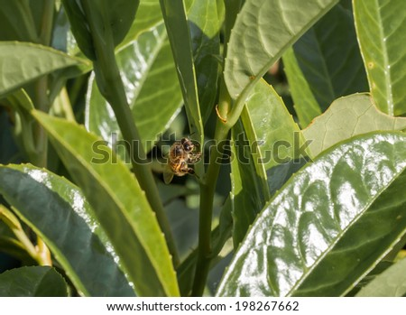 bee on green leafed plant - stock photo
