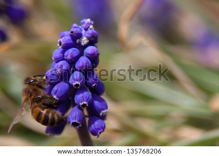 Bee on Purple Flower - stock photo