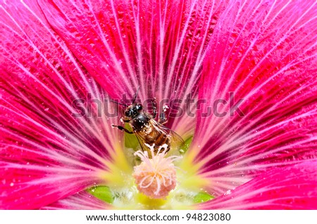 bee on red flower - stock photo