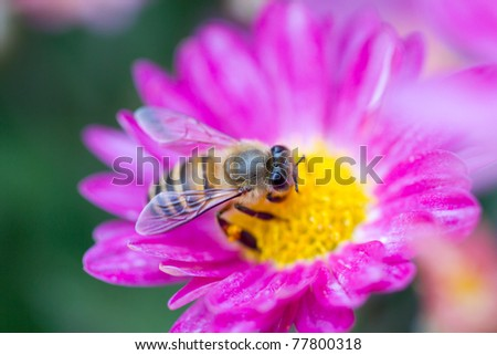 bee on the flower, collecting nectar - stock photo