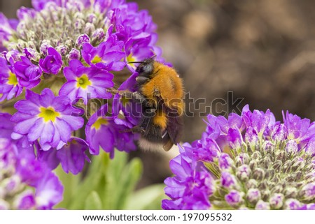 bee on the white background - stock photo