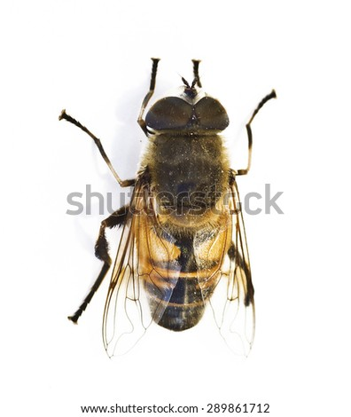 Bee on white background - stock photo