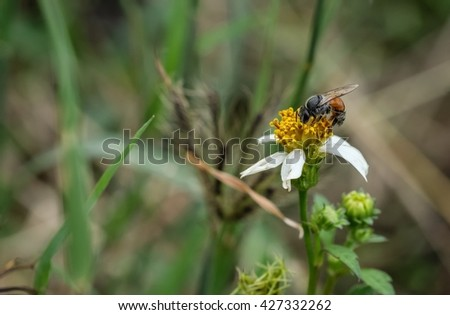 Bee on wild flower with blur green nature background