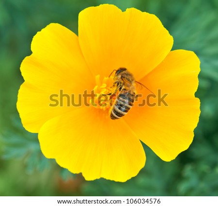 Bee on yellow flower background - stock photo