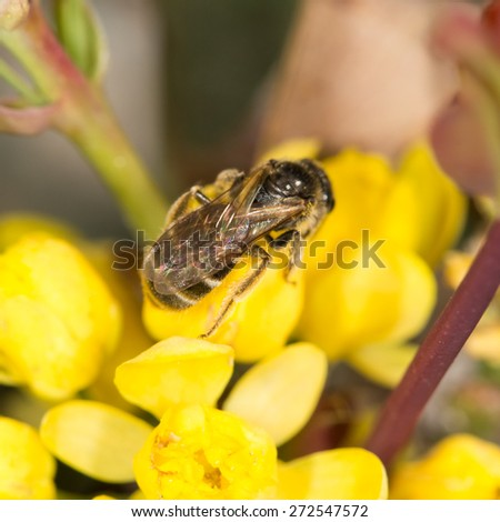 bee on yellow flower in nature. close-up - stock photo
