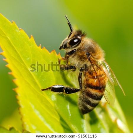 bee outdoor - stock photo