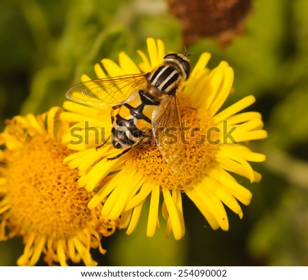 Bee pollinating flower - stock photo