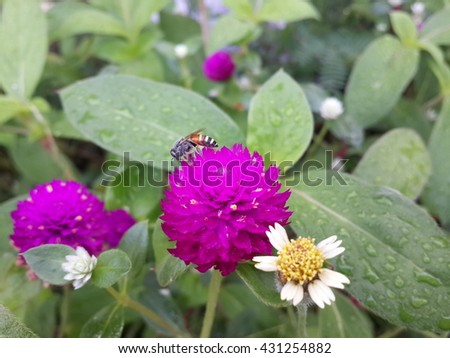 Bee sucking nectar from pink flower