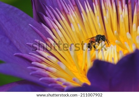 Bee worker - stock photo