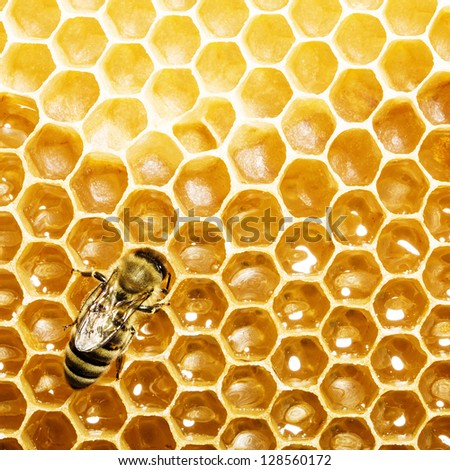 bee works on honeycomb. Honey cells pattern. - stock photo