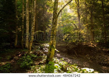 beech forest, a nature reserve in Europe, the Carpathians mountains