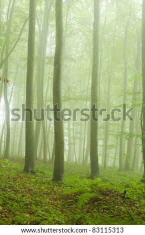Beech forest in the summer after the storm