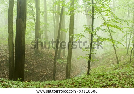 Beech forest in the summer after the storm - stock photo